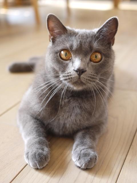 猫のお留守番 おぶくん編。_a0143140_22544906.jpg