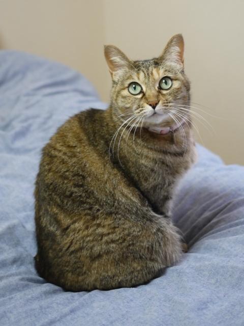 猫のお留守番 うたちゃん編。_a0143140_22580561.jpg