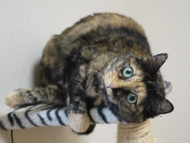 猫のお留守番 マチルダちゃん編。_a0143140_23013590.jpg