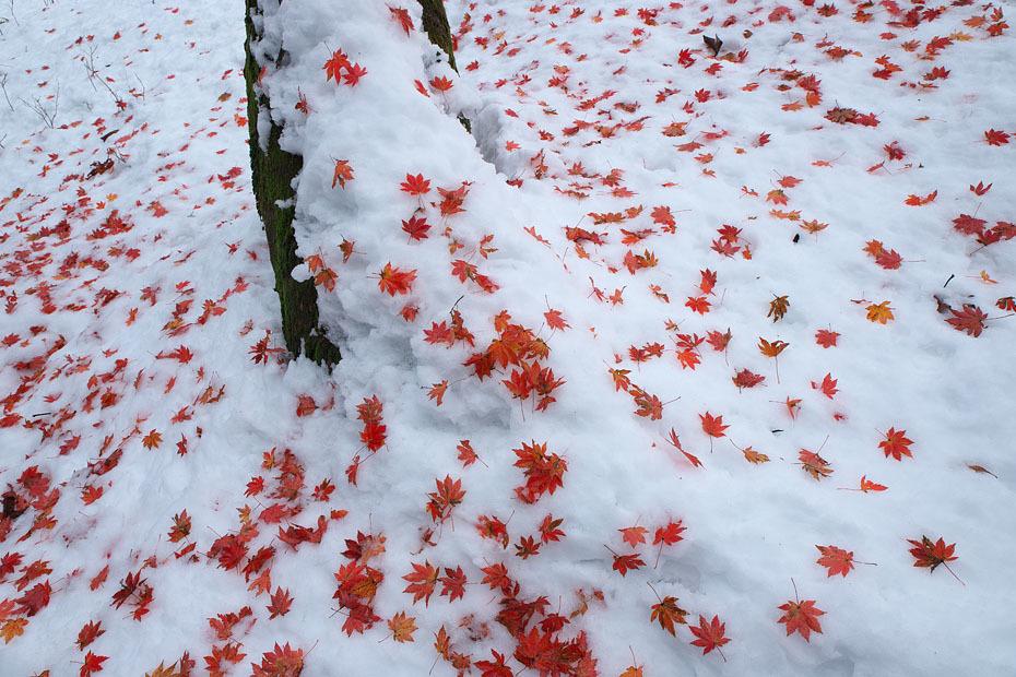 雪に紅葉_c0067040_19393870.jpg