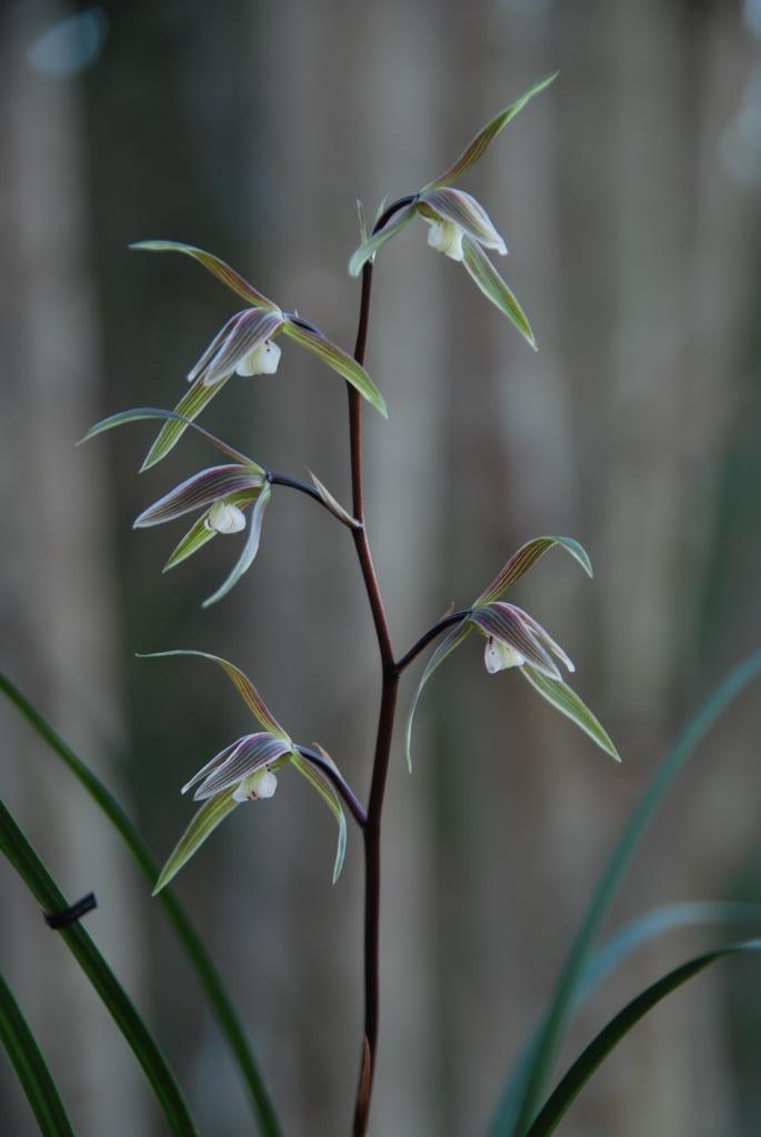 凛花にかこまれてこころは春_f0043750_08291323.jpg