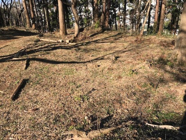 植樹したヤマアジサイの傍らにマーキング1・5_c0014967_06261348.jpg