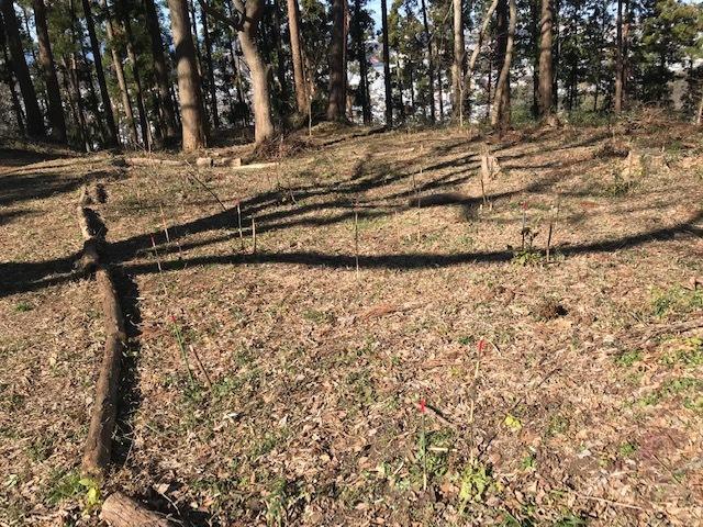 植樹したヤマアジサイの傍らにマーキング1・5_c0014967_06273536.jpg