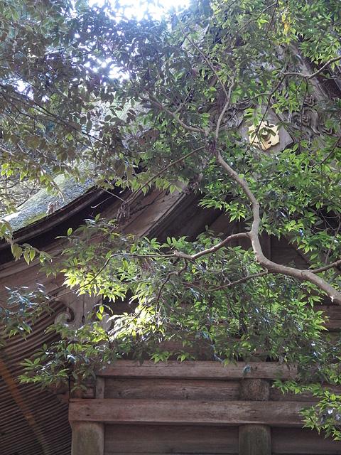 初詣は鹿島神宮と息栖神社へ (2020/1/4)_b0006870_7117.jpg