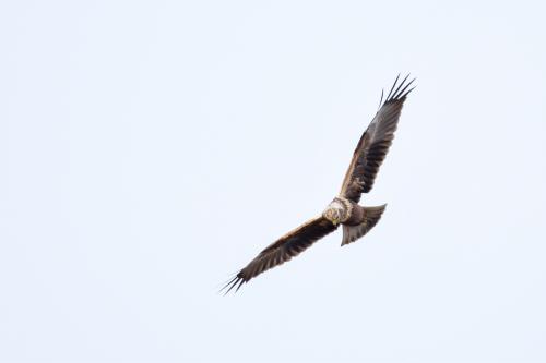 新春探鳥遠征_a0153971_23475659.jpg