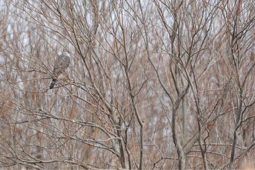 新春探鳥遠征_a0153971_23481077.jpg