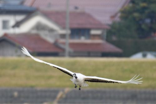 新春探鳥遠征_a0153971_23545329.jpg