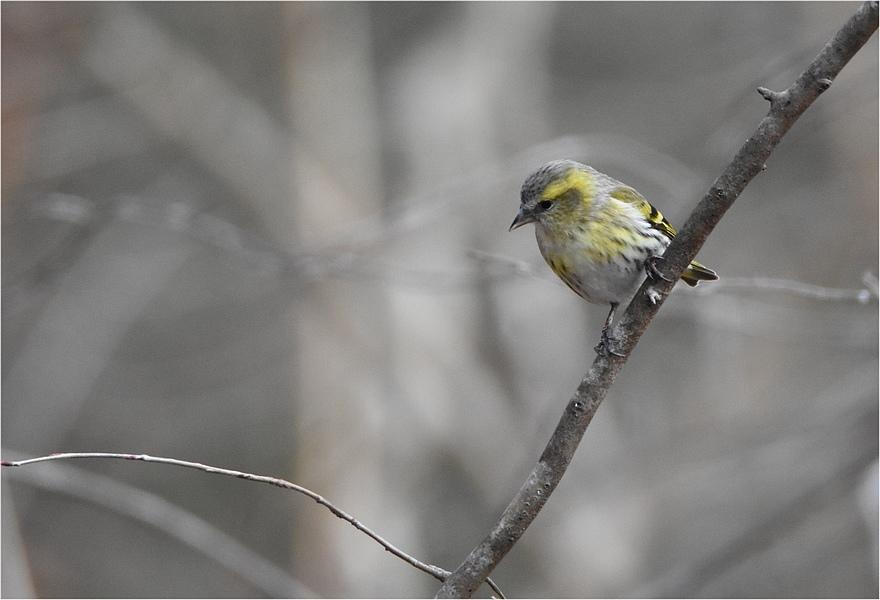 最初の鳥見_f0088971_16293719.jpg