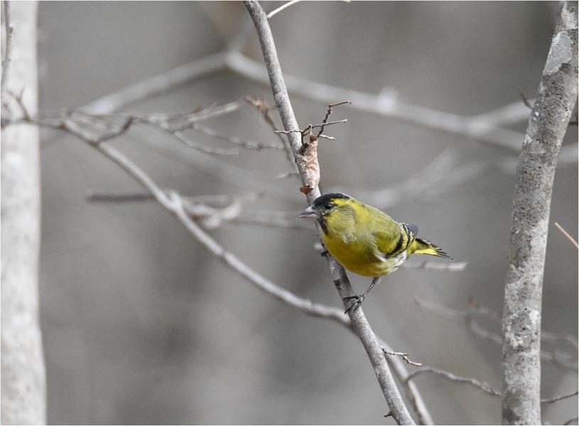 最初の鳥見_f0088971_16294004.jpg
