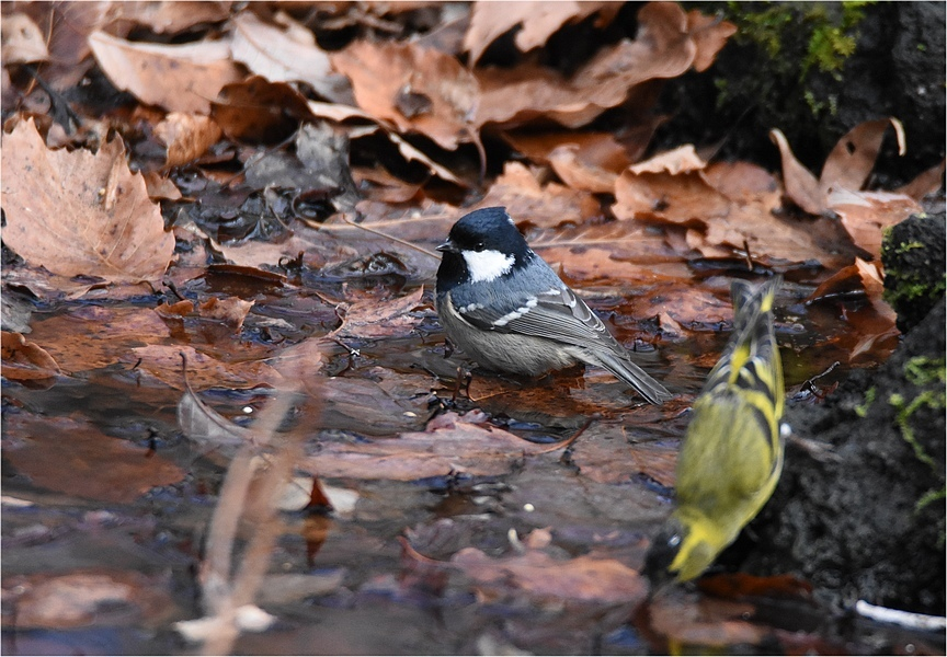 最初の鳥見_f0088971_16294491.jpg
