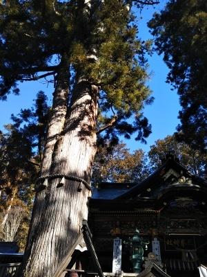 オークリーフ(三峯神社)_f0049672_20254377.jpg
