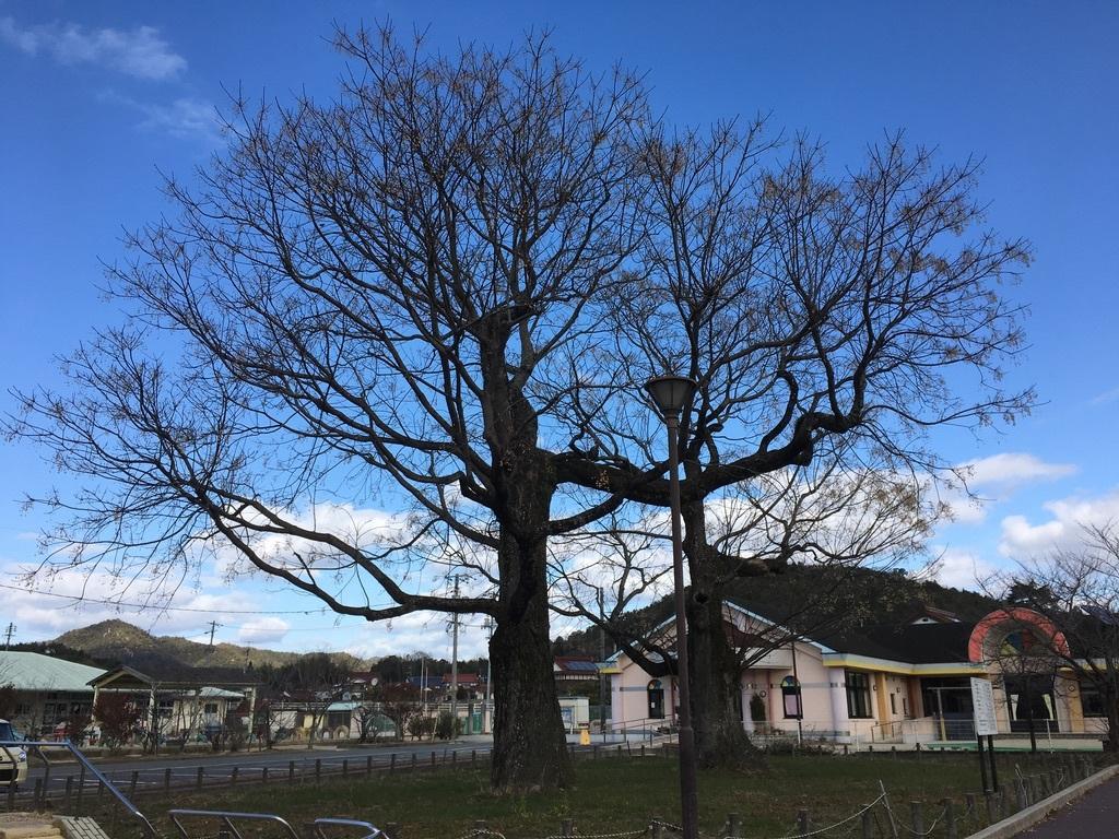 地元のパワースポット 〜センダンの木〜_c0334574_19502729.jpeg