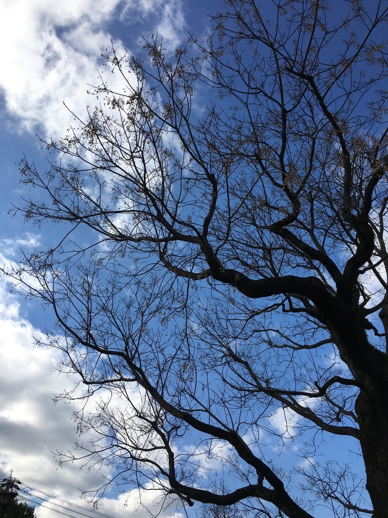 地元のパワースポット 〜センダンの木〜_c0334574_19503001.jpeg