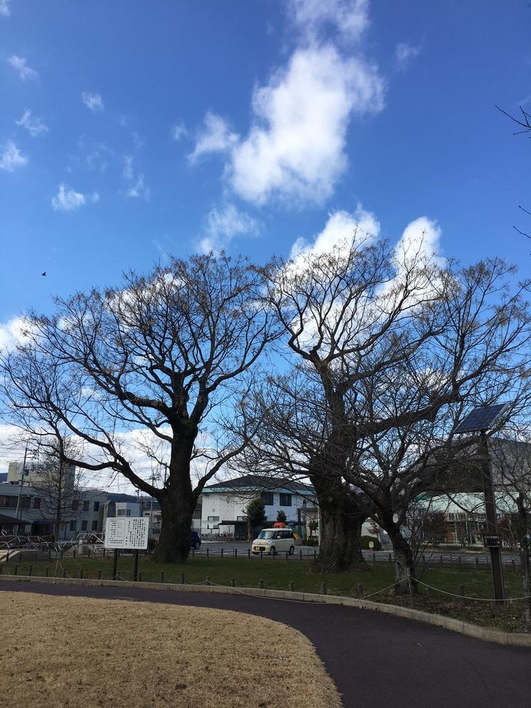 地元のパワースポット 〜センダンの木〜_c0334574_19504413.jpeg