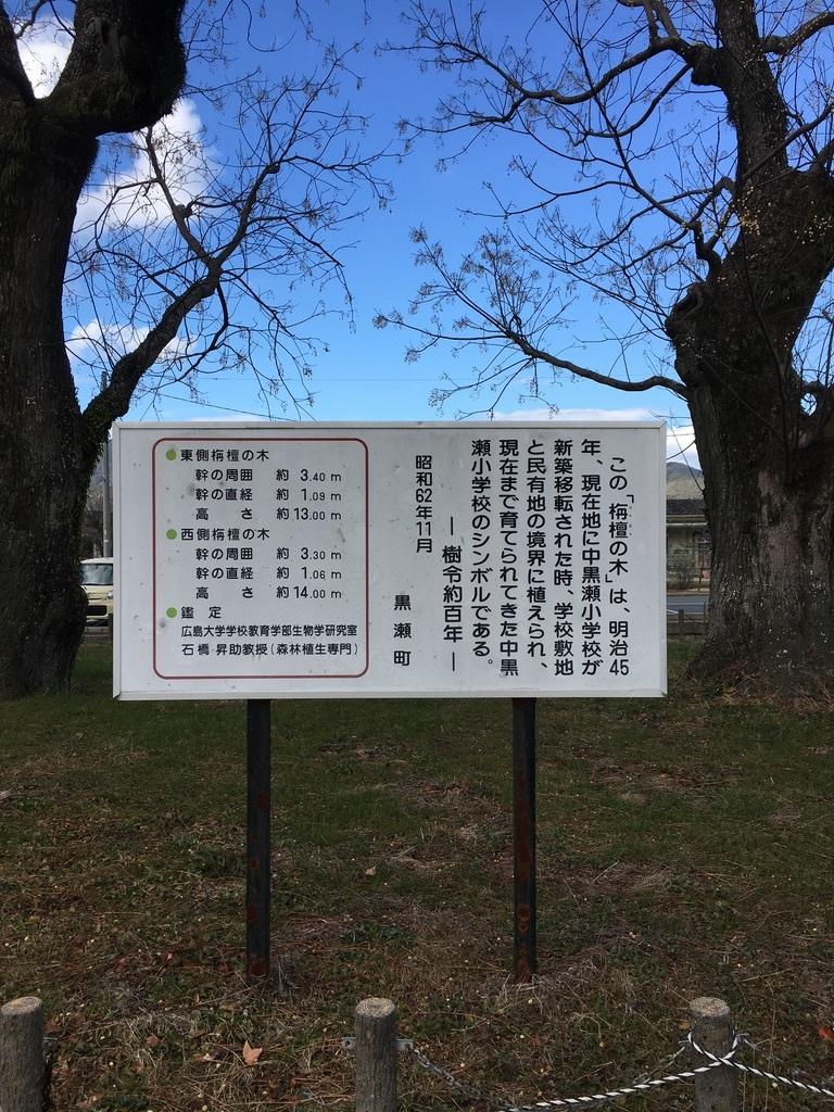 地元のパワースポット 〜センダンの木〜_c0334574_19504883.jpeg