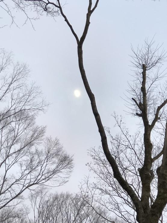 2020年1月6日 箱根神社初詣_b0098584_19053174.jpeg