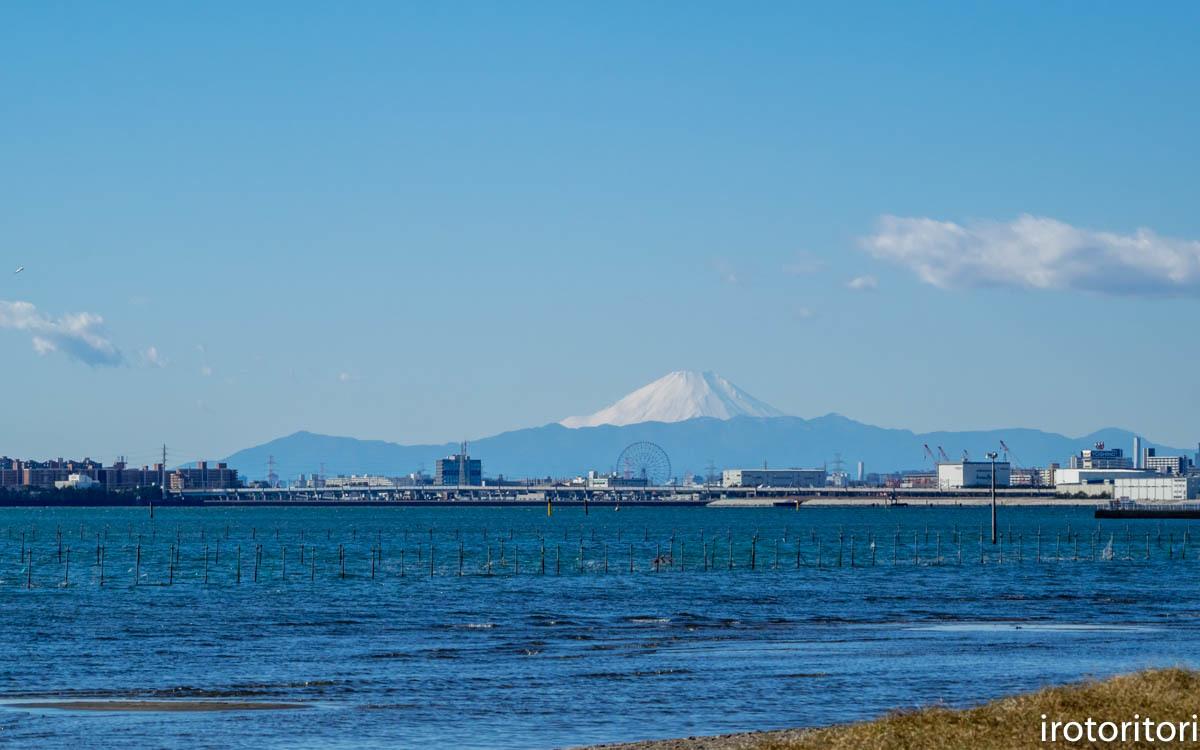 富士山  (ハマシギ)  2020/01/05_d0146592_00045637.jpg