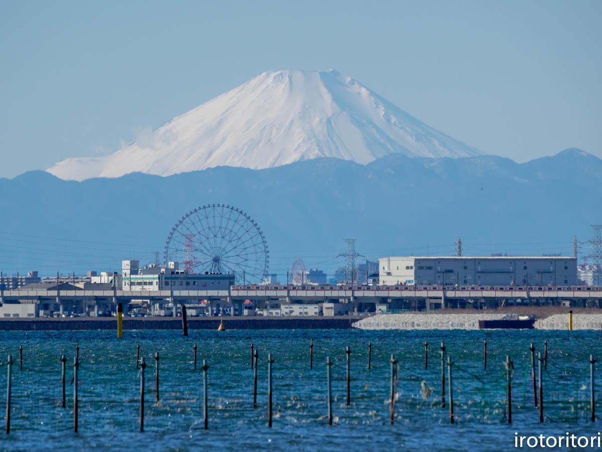 富士山  (ハマシギ)  2020/01/05_d0146592_00063296.jpg