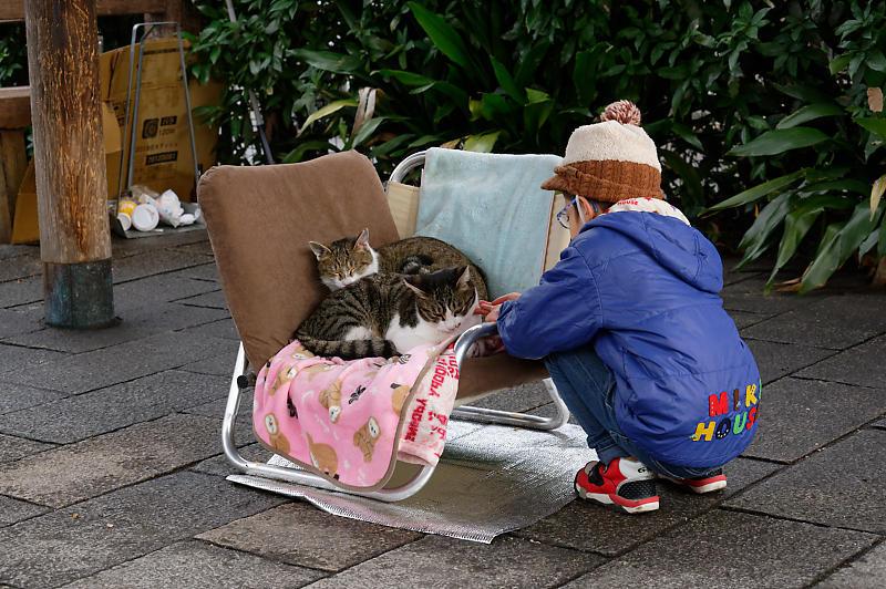 町角ニャンコ・猫団子_f0032011_19211608.jpg