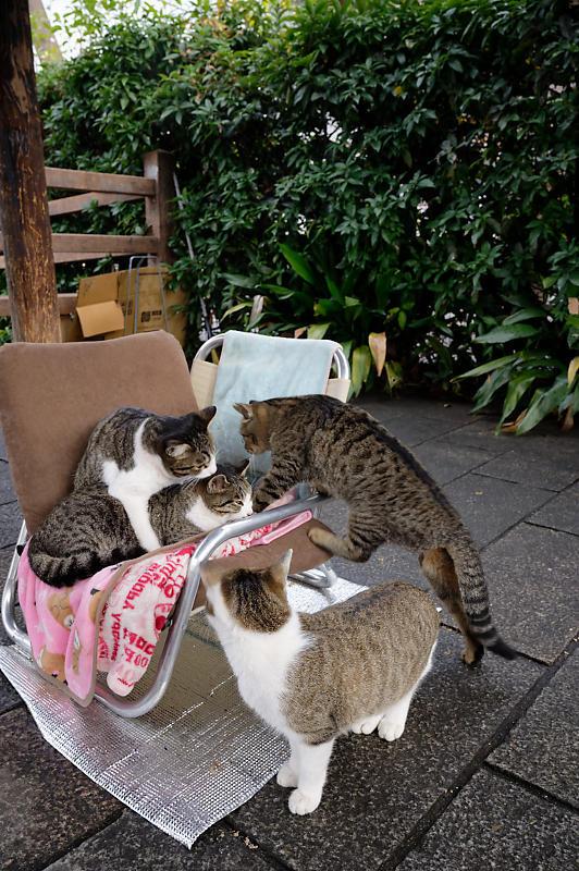 町角ニャンコ・猫団子_f0032011_19211609.jpg
