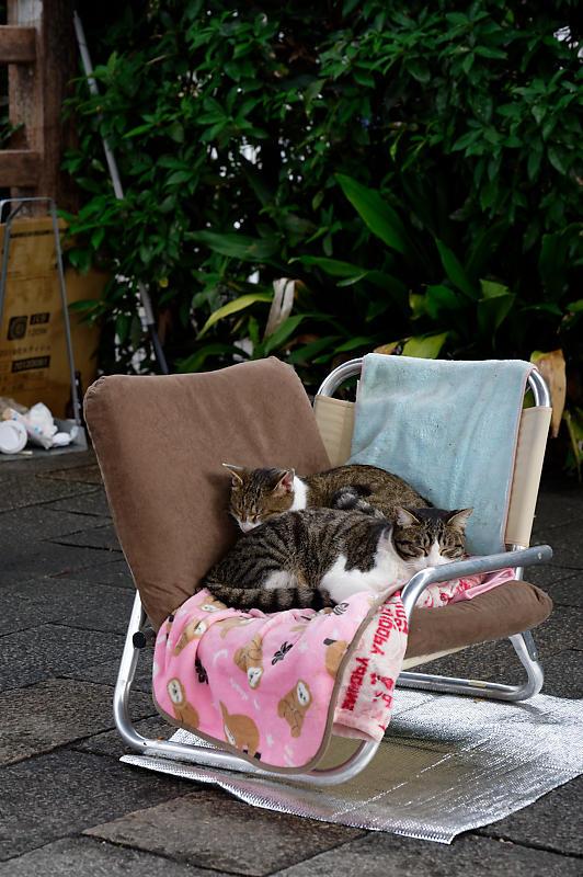 町角ニャンコ・猫団子_f0032011_19211637.jpg