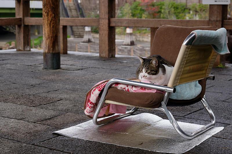 町角ニャンコ・猫団子_f0032011_19211662.jpg