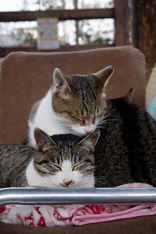町角ニャンコ・猫団子_f0032011_19211753.jpg
