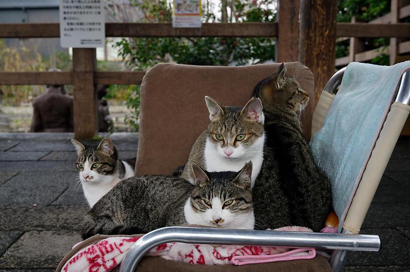町角ニャンコ・猫団子_f0032011_19211765.jpg