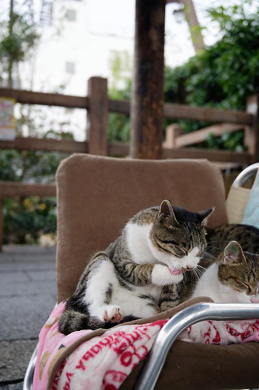町角ニャンコ・猫団子_f0032011_19211794.jpg