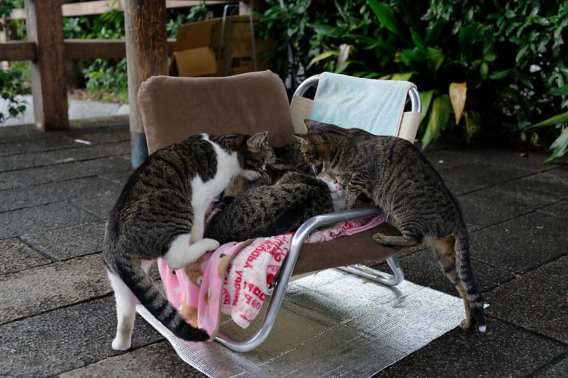 町角ニャンコ・猫団子_f0032011_19212381.jpg