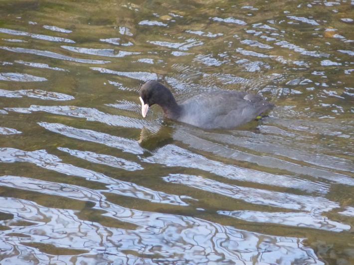 水辺の鳥_f0296312_21232933.jpg