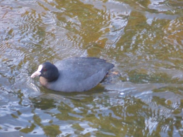 水辺の鳥_f0296312_21233225.jpg