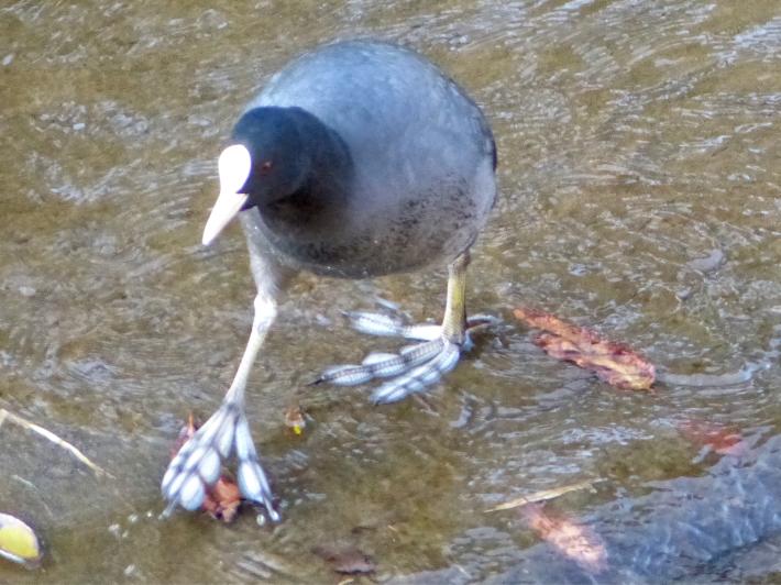 水辺の鳥_f0296312_23130007.jpg