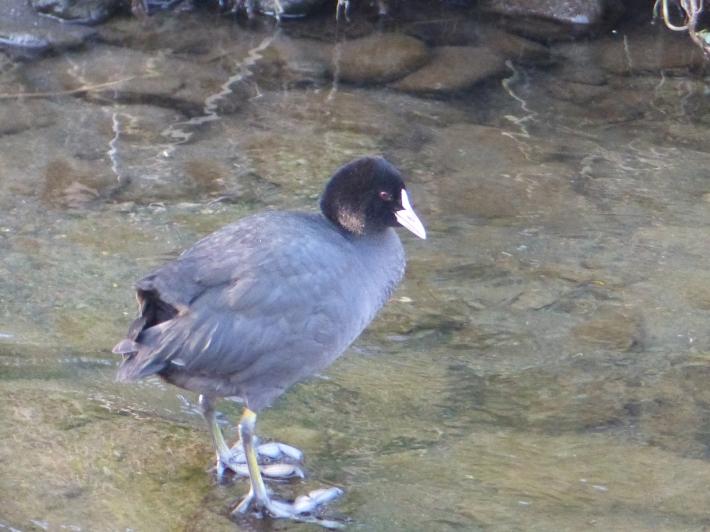 水辺の鳥_f0296312_23145474.jpg