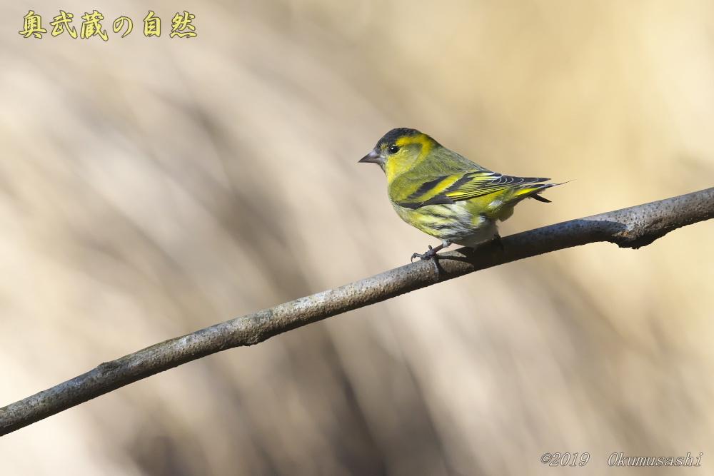 青い鳥の次は_e0268015_21085859.jpg
