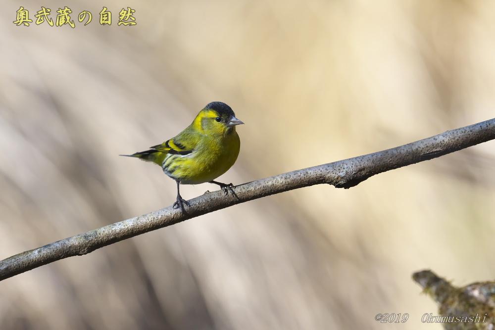 青い鳥の次は_e0268015_21092308.jpg