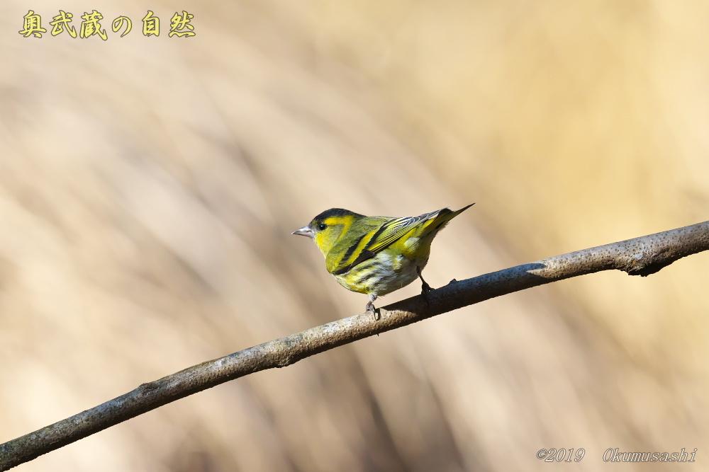 青い鳥の次は_e0268015_21093427.jpg