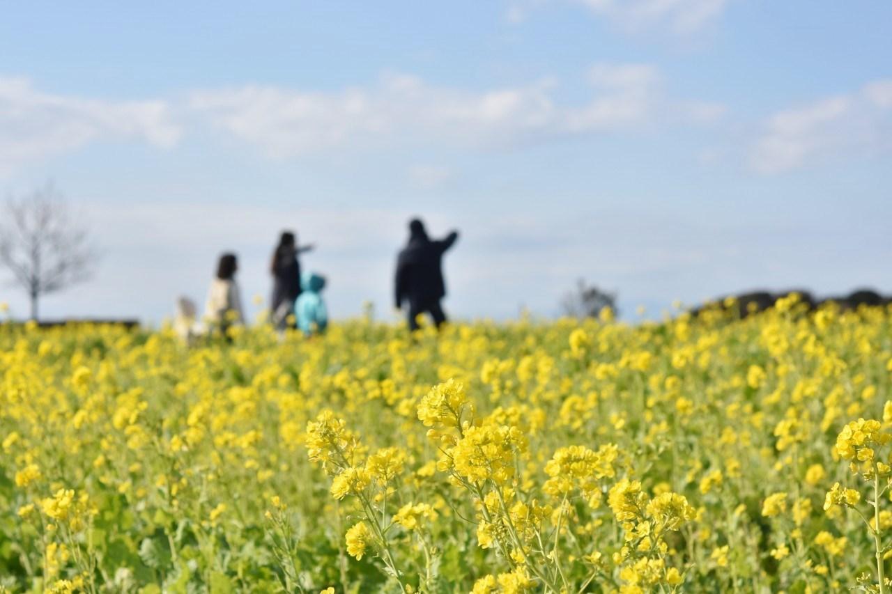 菜の花畑 ソレイユの丘_d0065116_22072207.jpg