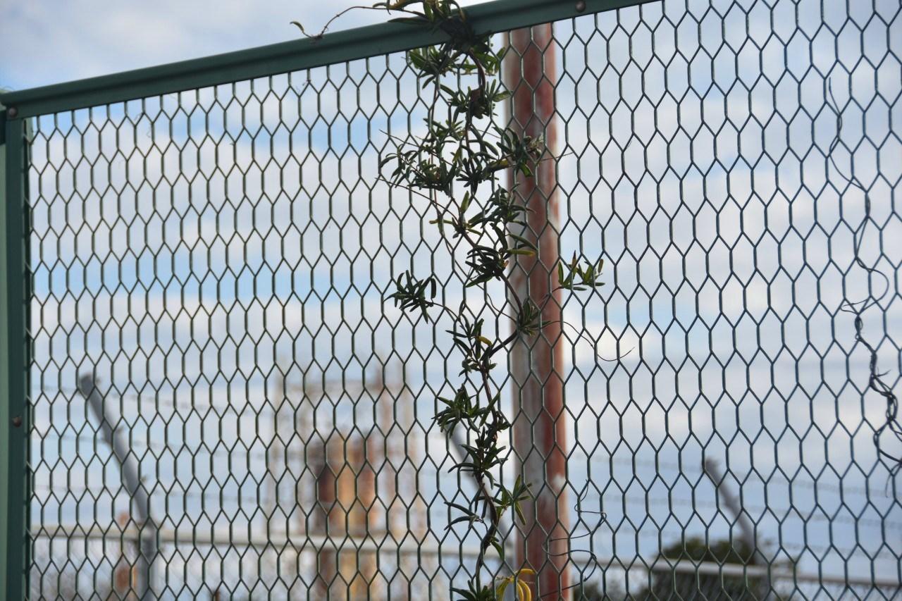 フェンスの向こう・・・_d0065116_22373834.jpg