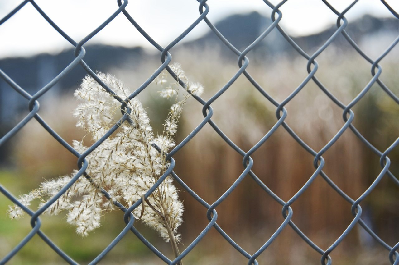 フェンスの向こう・・・_d0065116_22383205.jpg