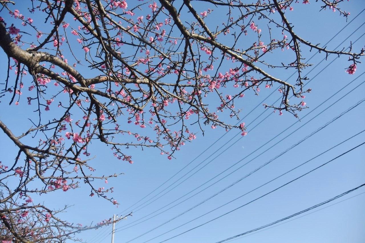 まだ咲き初めし桃色の・・・_d0065116_22580452.jpg