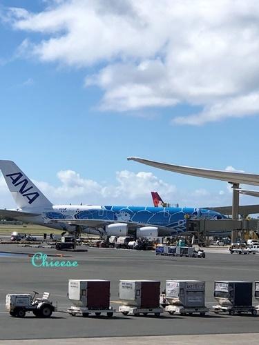 JAL ホノルル便 エコノミークラス 復路 2019_e0158121_12313612.jpg
