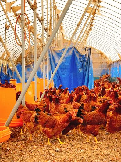 秋田比内地鶏 視察 きりたんぽレッスン_c0141025_15310358.jpeg