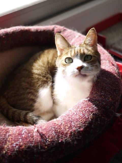 猫のお留守番 ウィンクくん編。_a0143140_22361950.jpg