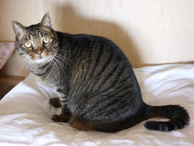 猫のお留守番 ララちゃん編。_a0143140_22383273.jpg