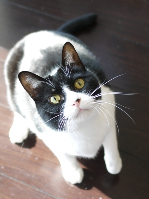猫のお留守番 ピケちゃん編。_a0143140_22405935.jpg
