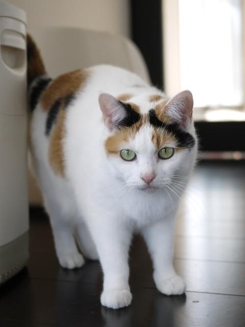 猫のお留守番 エンジェルちゃん編。_a0143140_22430584.jpg