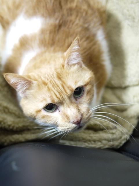 猫のお留守番 喜助くん編。_a0143140_22463517.jpg