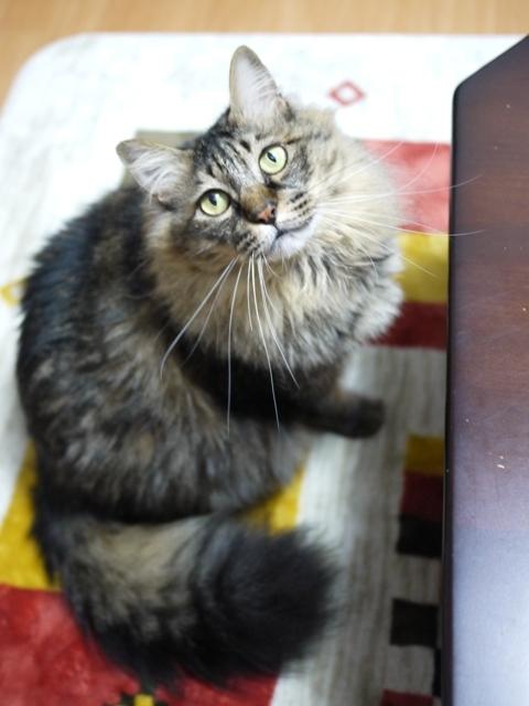 猫のお留守番 諭吉くん編。_a0143140_22494545.jpg