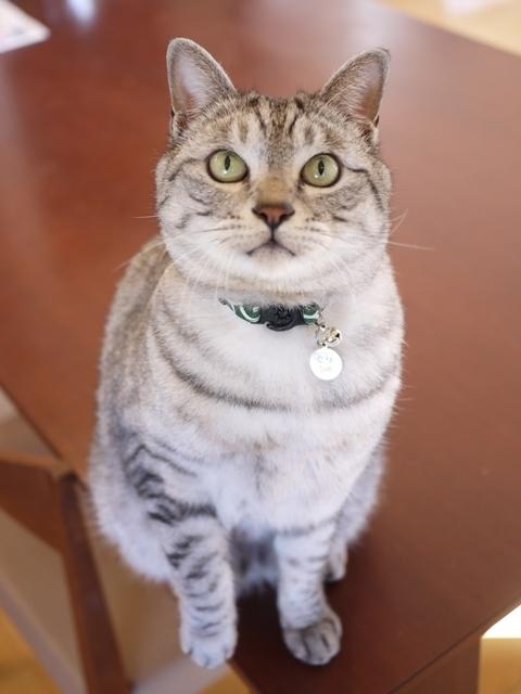 猫のお留守番 ぐらくん編。_a0143140_22551561.jpg